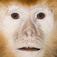 Mono que habla